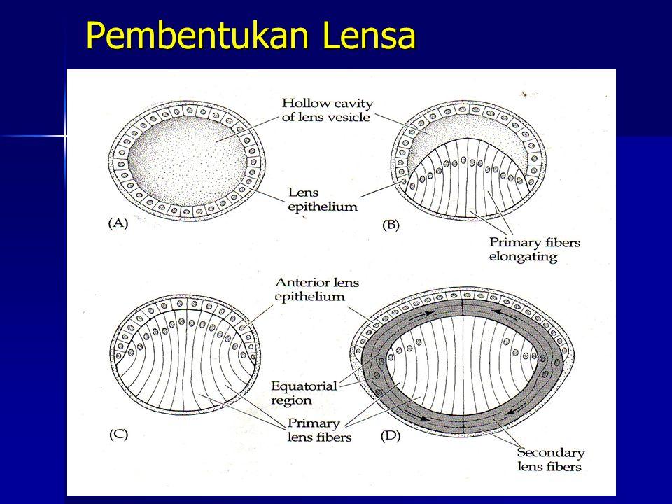 Pembentukan Lensa