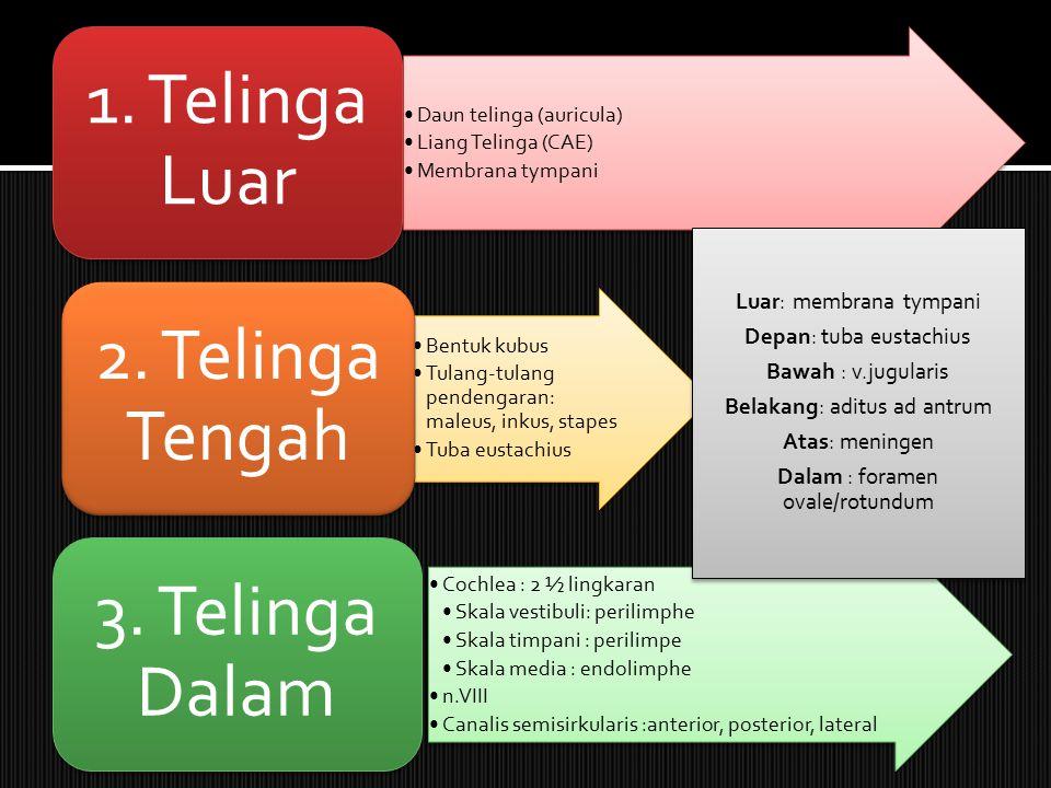 Daun telinga (auricula) Liang Telinga (CAE) Membrana tympani 1.