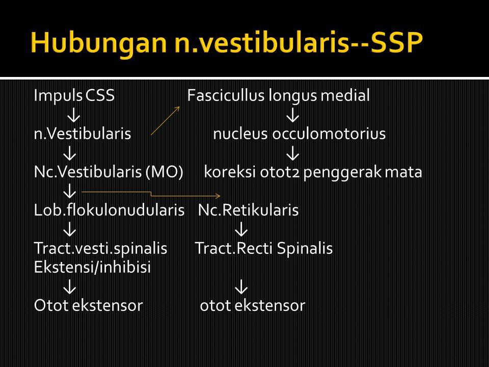 Impuls CSS Fascicullus longus medial ↓ ↓ n.Vestibularis nucleus occulomotorius ↓ ↓ Nc.Vestibularis (MO) koreksi otot2 penggerak mata ↓ Lob.flokulonudularis Nc.Retikularis ↓ ↓ Tract.vesti.spinalis Tract.Recti Spinalis Ekstensi/inhibisi ↓ ↓ Otot ekstensor otot ekstensor