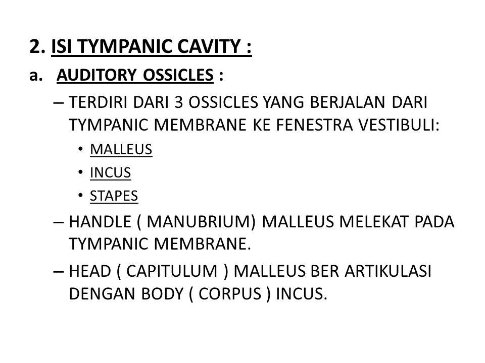2. ISI TYMPANIC CAVITY : a.AUDITORY OSSICLES : – TERDIRI DARI 3 OSSICLES YANG BERJALAN DARI TYMPANIC MEMBRANE KE FENESTRA VESTIBULI: MALLEUS INCUS STA