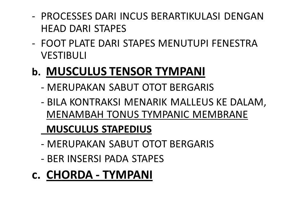-PROCESSES DARI INCUS BERARTIKULASI DENGAN HEAD DARI STAPES -FOOT PLATE DARI STAPES MENUTUPI FENESTRA VESTIBULI b. MUSCULUS TENSOR TYMPANI - MERUPAKAN