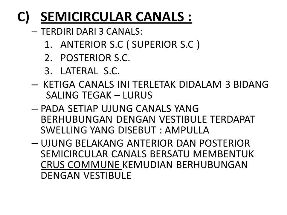 C)SEMICIRCULAR CANALS : – TERDIRI DARI 3 CANALS: 1.ANTERIOR S.C ( SUPERIOR S.C ) 2.POSTERIOR S.C. 3.LATERAL S.C. – KETIGA CANALS INI TERLETAK DIDALAM
