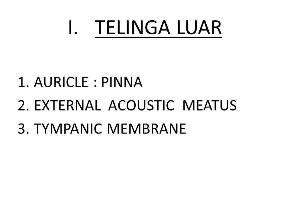 I.TELINGA LUAR 1.AURICLE : PINNA 2.EXTERNAL ACOUSTIC MEATUS 3.TYMPANIC MEMBRANE
