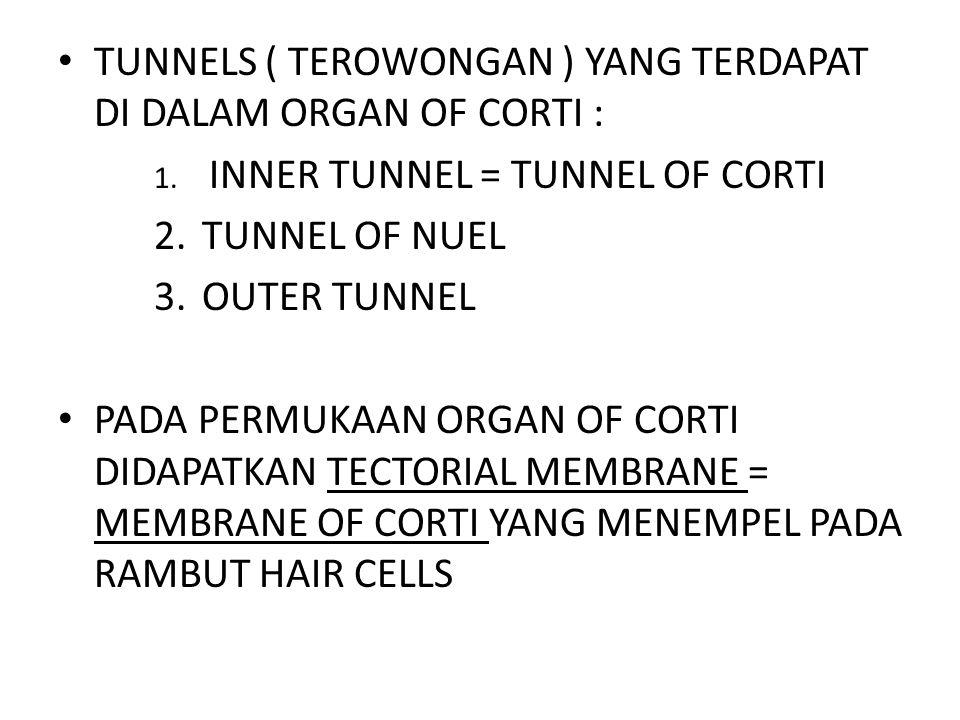 TUNNELS ( TEROWONGAN ) YANG TERDAPAT DI DALAM ORGAN OF CORTI : 1. INNER TUNNEL = TUNNEL OF CORTI 2.TUNNEL OF NUEL 3.OUTER TUNNEL PADA PERMUKAAN ORGAN