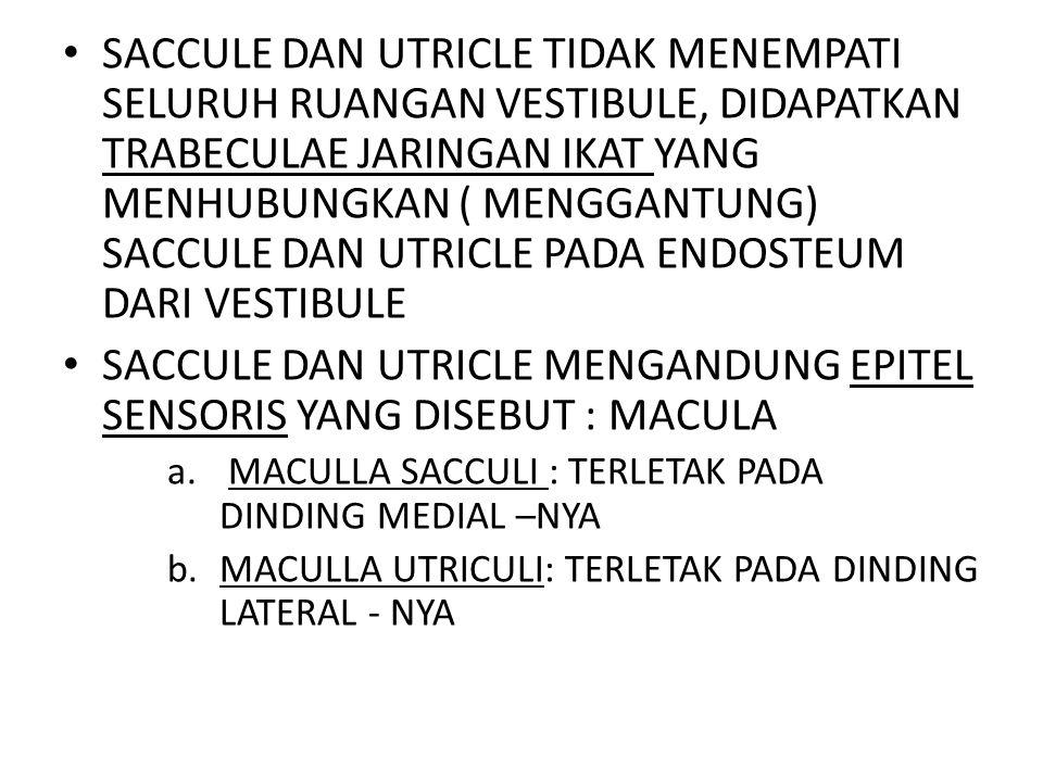 SACCULE DAN UTRICLE TIDAK MENEMPATI SELURUH RUANGAN VESTIBULE, DIDAPATKAN TRABECULAE JARINGAN IKAT YANG MENHUBUNGKAN ( MENGGANTUNG) SACCULE DAN UTRICL