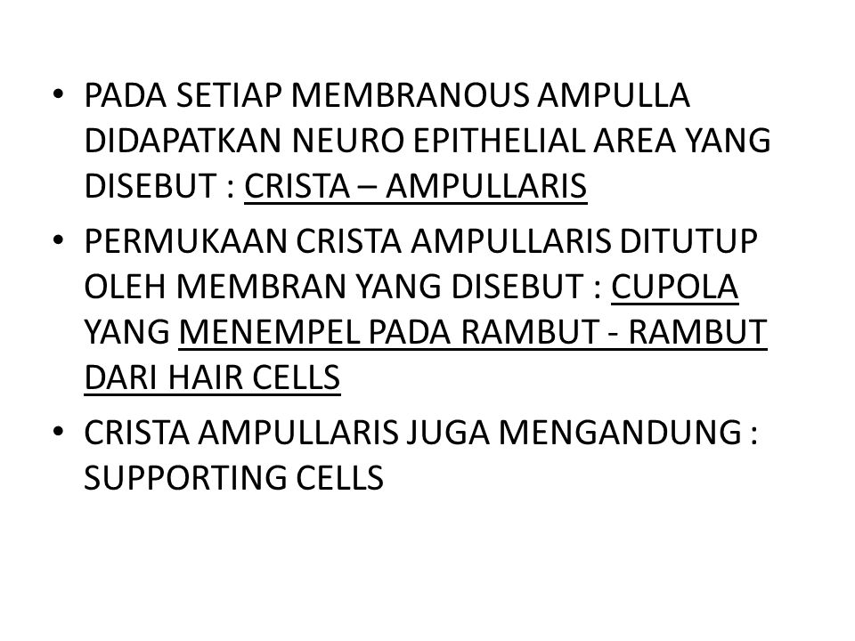 PADA SETIAP MEMBRANOUS AMPULLA DIDAPATKAN NEURO EPITHELIAL AREA YANG DISEBUT : CRISTA – AMPULLARIS PERMUKAAN CRISTA AMPULLARIS DITUTUP OLEH MEMBRAN YA