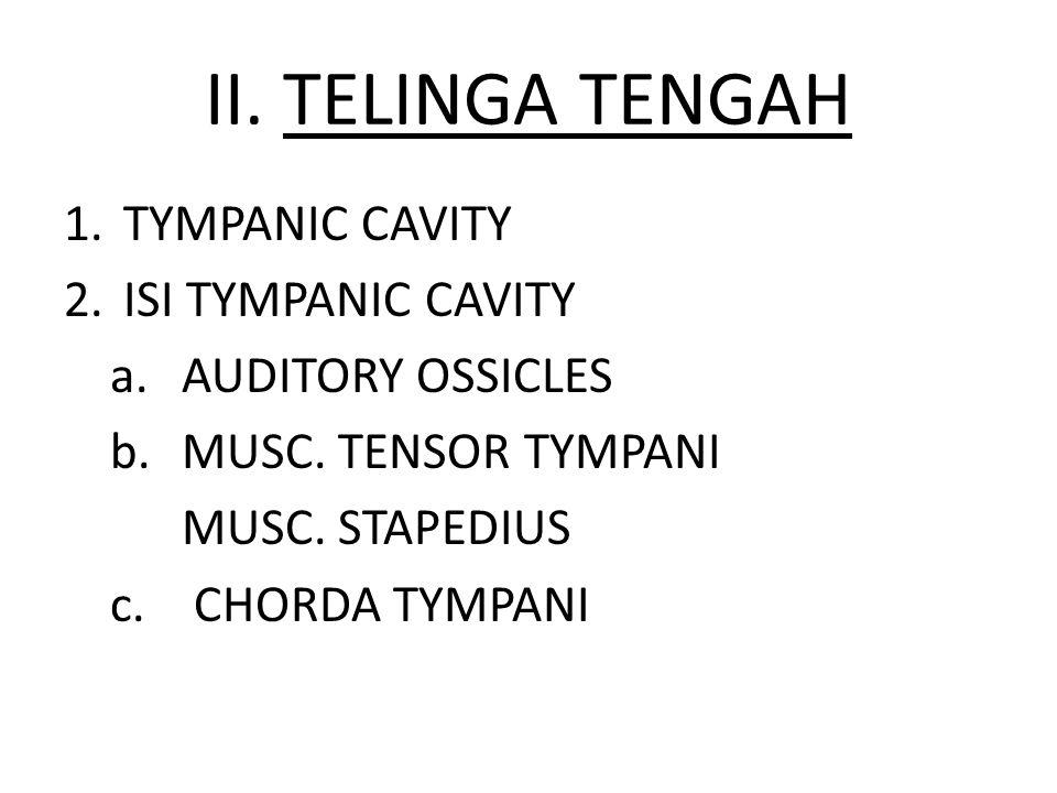 II. TELINGA TENGAH 1.TYMPANIC CAVITY 2.ISI TYMPANIC CAVITY a. AUDITORY OSSICLES b. MUSC. TENSOR TYMPANI MUSC. STAPEDIUS c. CHORDA TYMPANI