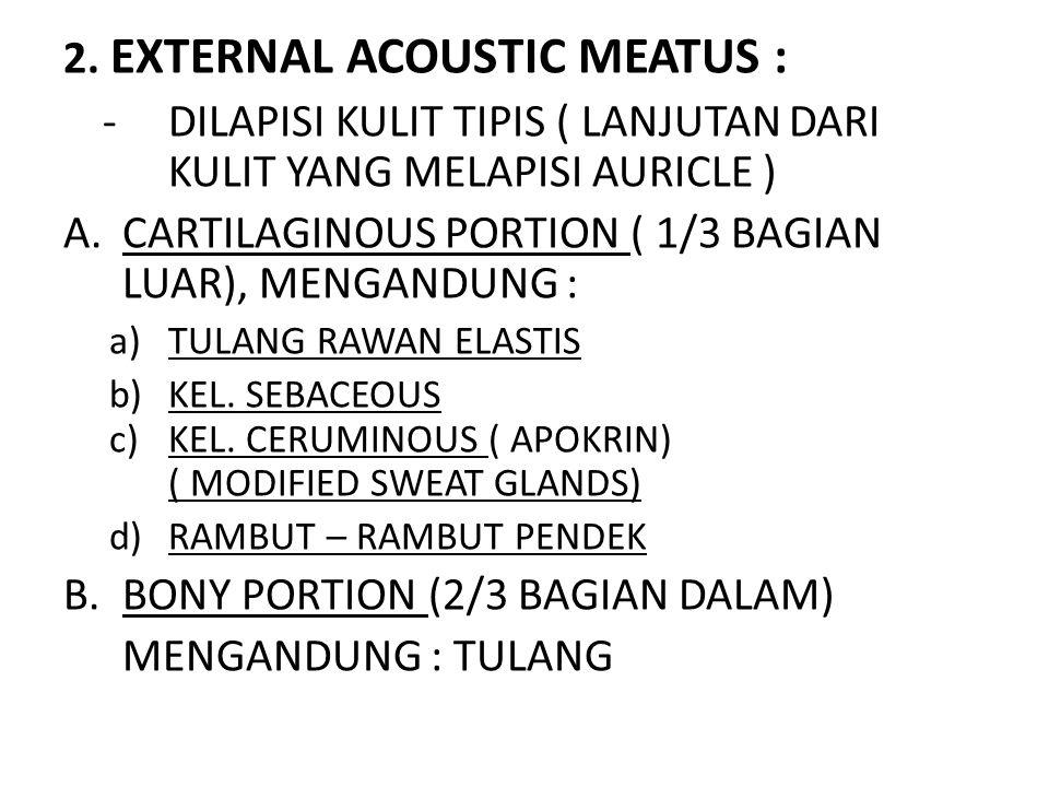2. EXTERNAL ACOUSTIC MEATUS : - DILAPISI KULIT TIPIS ( LANJUTAN DARI KULIT YANG MELAPISI AURICLE ) A.CARTILAGINOUS PORTION ( 1/3 BAGIAN LUAR), MENGAND