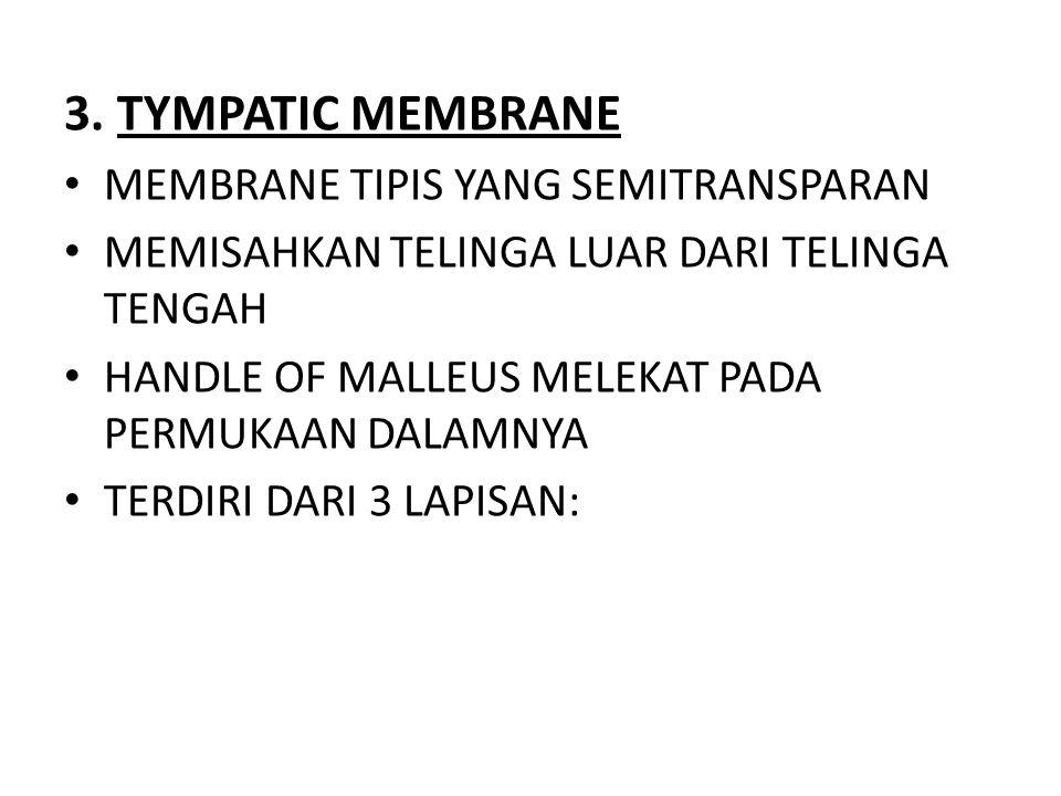 3. TYMPATIC MEMBRANE MEMBRANE TIPIS YANG SEMITRANSPARAN MEMISAHKAN TELINGA LUAR DARI TELINGA TENGAH HANDLE OF MALLEUS MELEKAT PADA PERMUKAAN DALAMNYA