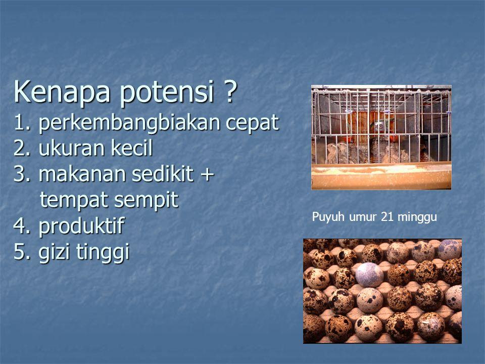 Pertanyaan: 1.Manakah yang kebutuhan nutrisi proteinnya lebih tinggi puyuh atau ayam.