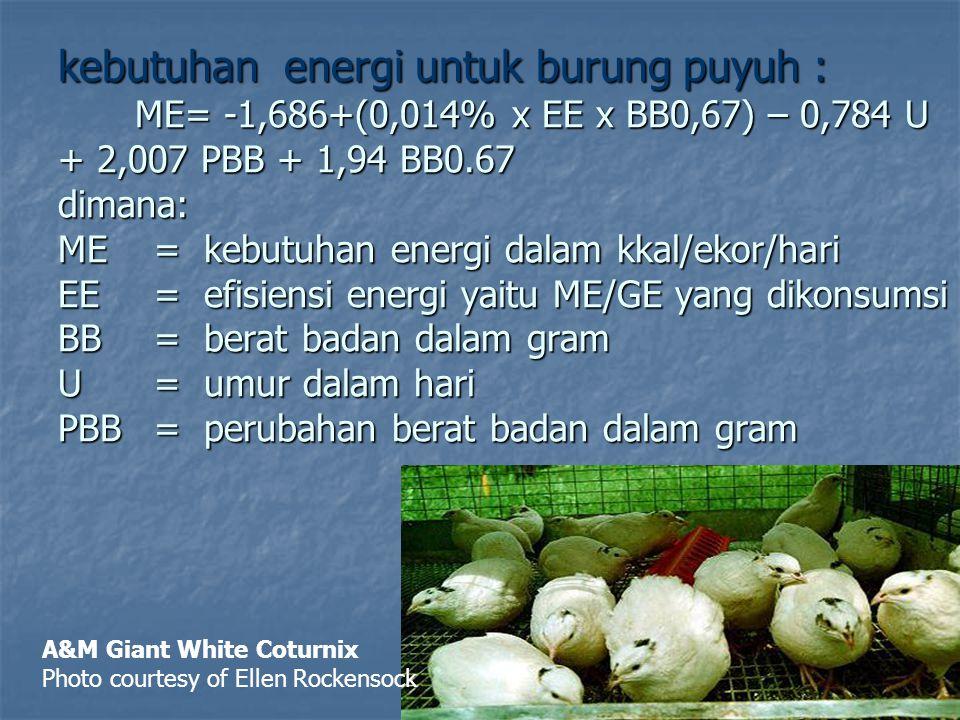 kebutuhan energi untuk burung puyuh : ME= -1,686+(0,014% x EE x BB0,67) – 0,784 U + 2,007 PBB + 1,94 BB0.67 dimana: ME = kebutuhan energi dalam kkal/e