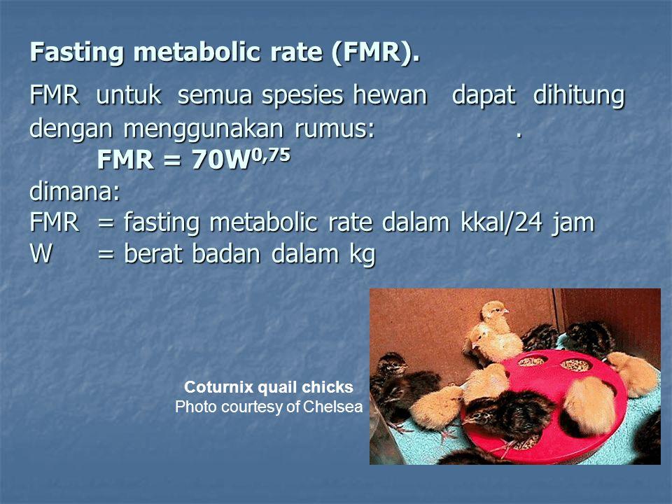 Resting metabolic rate (RMR) Dari penelitian yang dilakukan oleh Freeman dapat disimpulkan bahwa RMR untuk burung puyuh dewasa adalah: RMR/jam = 12,4 ml O2 x BB0,67 Jika konsumsi O2 untuk burung puyuh dewasa adalah 7,53 liter per 24 jam dan memetabolis karbohidrat dengan menghasilkan panas setara dengan 5 kkal/liter O2 yang dikonsumsi, maka: RMR/24 jam = 7,53 x 5= 37,6 kkal