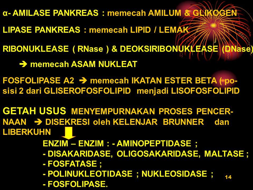 14 α- AMILASE PANKREAS : memecah AMILUM & GLIKOGEN LIPASE PANKREAS : memecah LIPID / LEMAK RIBONUKLEASE ( RNase ) & DEOKSIRIBONUKLEASE (DNase)  memec