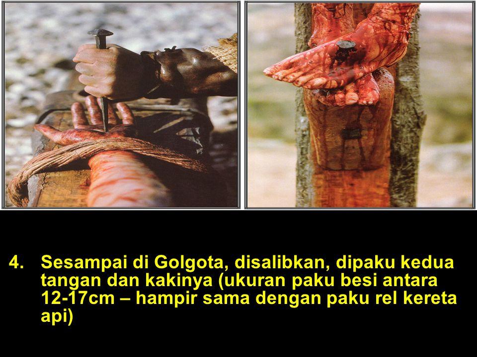 4.Sesampai di Golgota, disalibkan, dipaku kedua tangan dan kakinya (ukuran paku besi antara 12-17cm – hampir sama dengan paku rel kereta api)