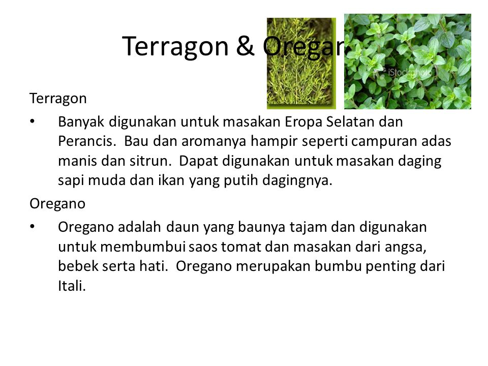 Terragon & Oregano Terragon Banyak digunakan untuk masakan Eropa Selatan dan Perancis. Bau dan aromanya hampir seperti campuran adas manis dan sitrun.
