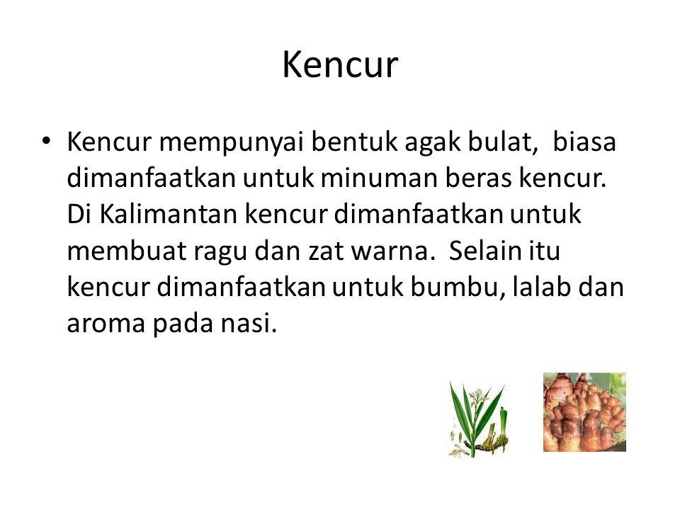 Kencur Kencur mempunyai bentuk agak bulat, biasa dimanfaatkan untuk minuman beras kencur. Di Kalimantan kencur dimanfaatkan untuk membuat ragu dan zat
