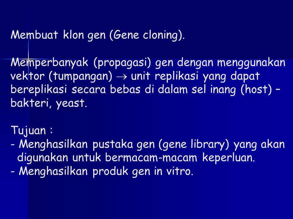 Membuat klon gen (Gene cloning). Memperbanyak (propagasi) gen dengan menggunakan vektor (tumpangan)  unit replikasi yang dapat bereplikasi secara beb
