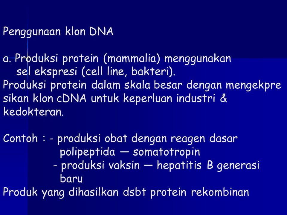 Penggunaan klon DNA a. Produksi protein (mammalia) menggunakan sel ekspresi (cell line, bakteri). Produksi protein dalam skala besar dengan mengekpre
