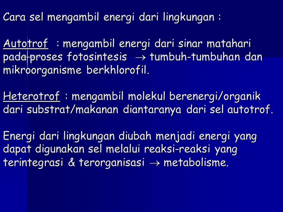 Cara sel mengambil energi dari lingkungan : Autotrof : mengambil energi dari sinar matahari pada proses fotosintesis  tumbuh-tumbuhan dan mikroorgani