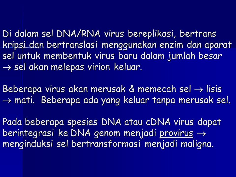 Di dalam sel DNA/RNA virus bereplikasi, bertrans kripsi dan bertranslasi menggunakan enzim dan aparat sel untuk membentuk virus baru dalam jumlah besa