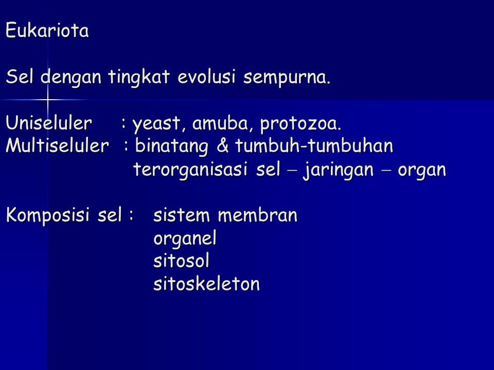 Eukariota Sel dengan tingkat evolusi sempurna. Uniseluler : yeast, amuba, protozoa. Multiseluler : binatang & tumbuh-tumbuhan terorganisasi sel  jari