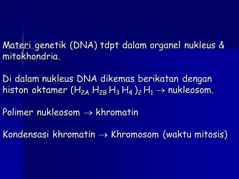 Materi genetik (DNA) tdpt dalam organel nukleus & mitokhondria. Di dalam nukleus DNA dikemas berikatan dengan histon oktamer (H 2A H 2B H 3 H 4 ) 2 H