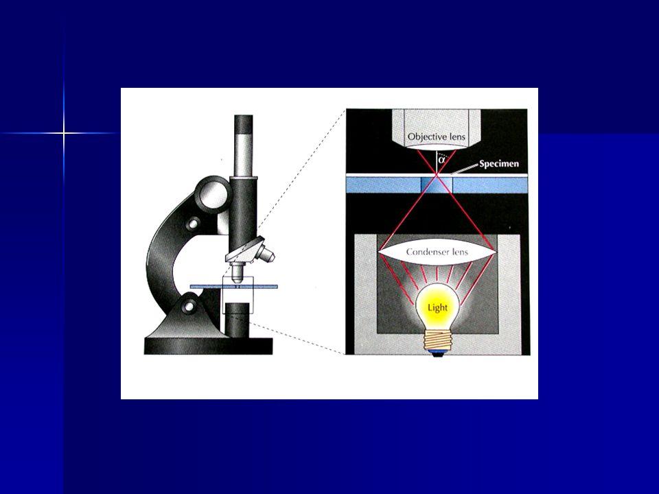 Sel heterotrof dibedakan menjadi 2 golongan berdasarkan caranya menggunakan aseptor elektron (oksidator) - aerob : menggunakan O 2 sebagai aseptor elektron terakhir.