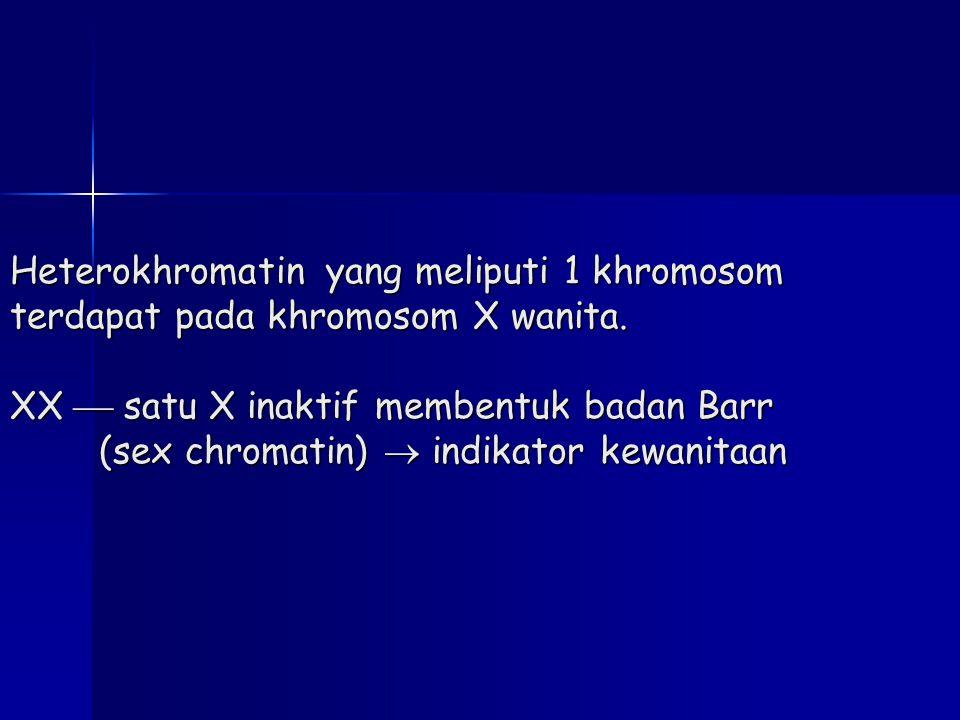 Heterokhromatin yang meliputi 1 khromosom terdapat pada khromosom X wanita. XX  satu X inaktif membentuk badan Barr (sex chromatin)  indikator kewan