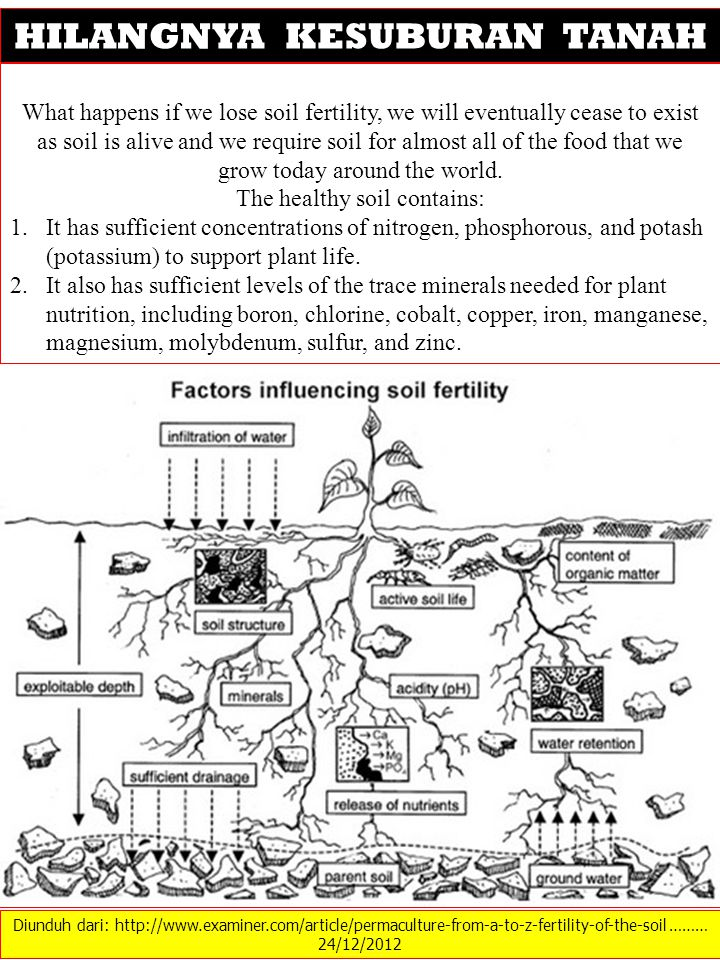 Diunduh dari: http://www.examiner.com/article/permaculture-from-a-to-z-fertility-of-the-soil ……… 24/12/2012 HILANGNYA KESUBURAN TANAH What happens if we lose soil fertility, we will eventually cease to exist as soil is alive and we require soil for almost all of the food that we grow today around the world.