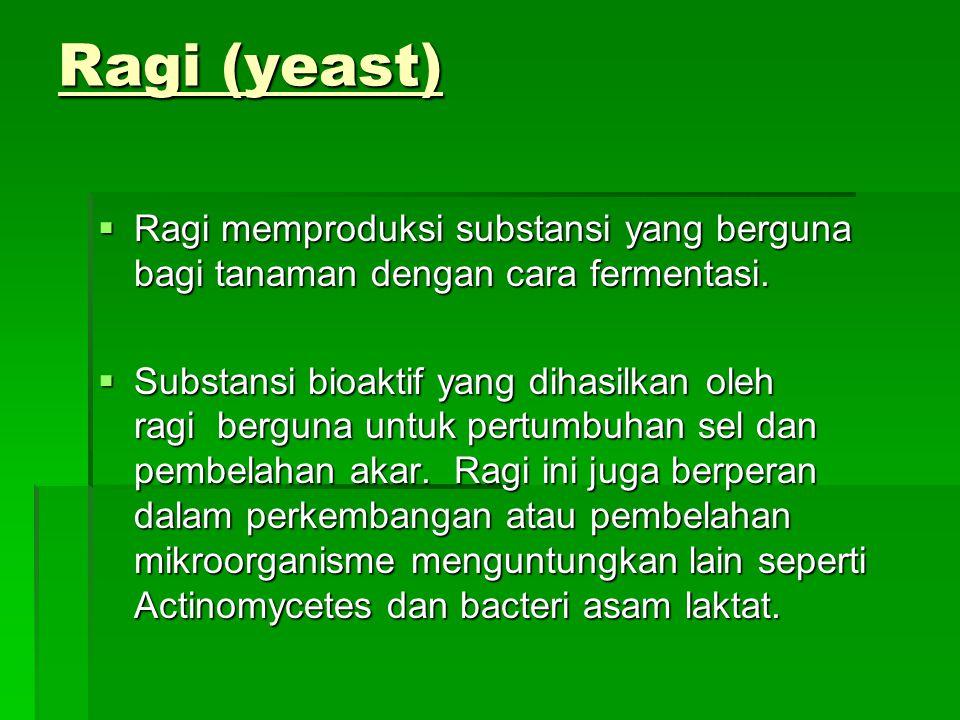 Ragi (yeast)  Ragi memproduksi substansi yang berguna bagi tanaman dengan cara fermentasi.  Substansi bioaktif yang dihasilkan oleh ragi berguna unt