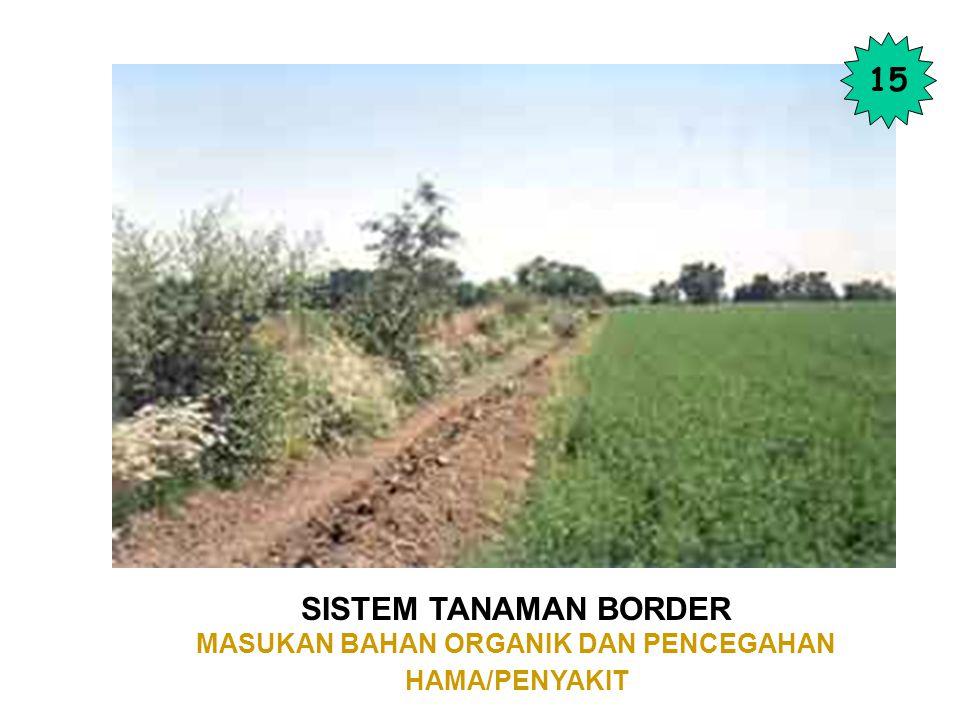 SISTEM TANAMAN BORDER MASUKAN BAHAN ORGANIK DAN PENCEGAHAN HAMA/PENYAKIT 15