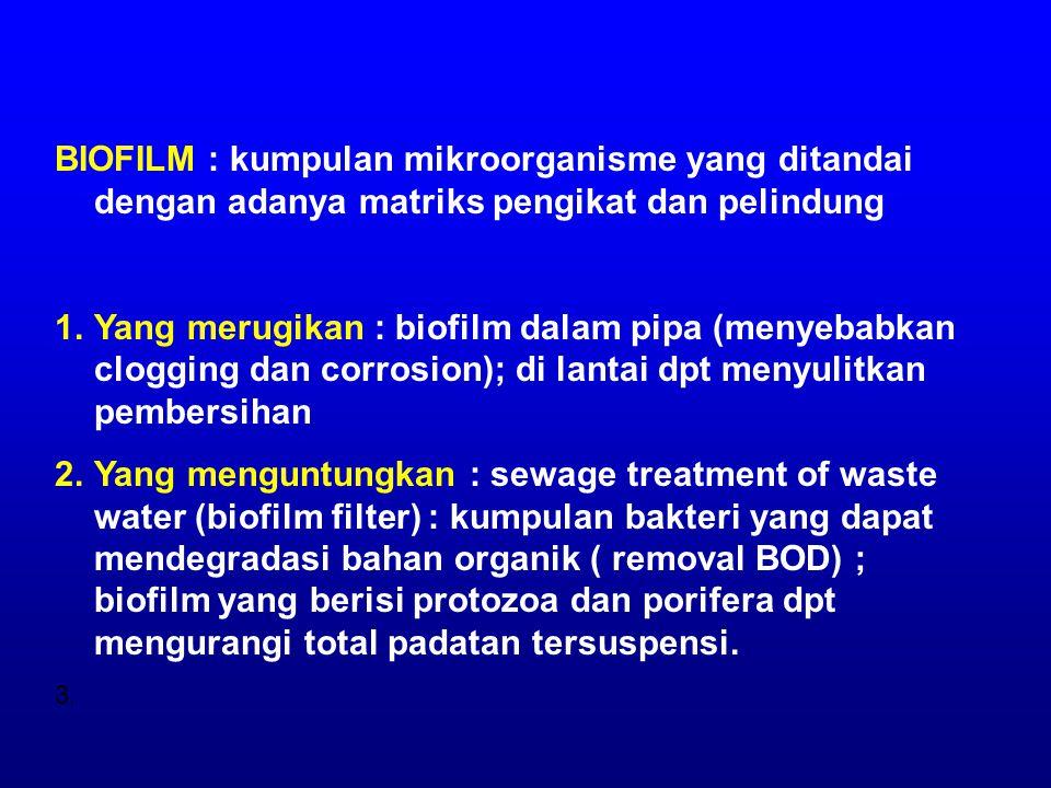 BIOFILM : kumpulan mikroorganisme yang ditandai dengan adanya matriks pengikat dan pelindung 1.Yang merugikan : biofilm dalam pipa (menyebabkan clogging dan corrosion); di lantai dpt menyulitkan pembersihan 2.Yang menguntungkan : sewage treatment of waste water (biofilm filter) : kumpulan bakteri yang dapat mendegradasi bahan organik ( removal BOD) ; biofilm yang berisi protozoa dan porifera dpt mengurangi total padatan tersuspensi.