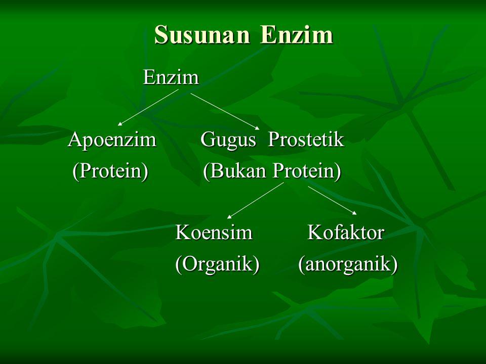 Susunan Enzim Enzim Enzim Apoenzim Gugus Prostetik Apoenzim Gugus Prostetik (Protein) (Bukan Protein) (Protein) (Bukan Protein) Koensim Kofaktor Koens