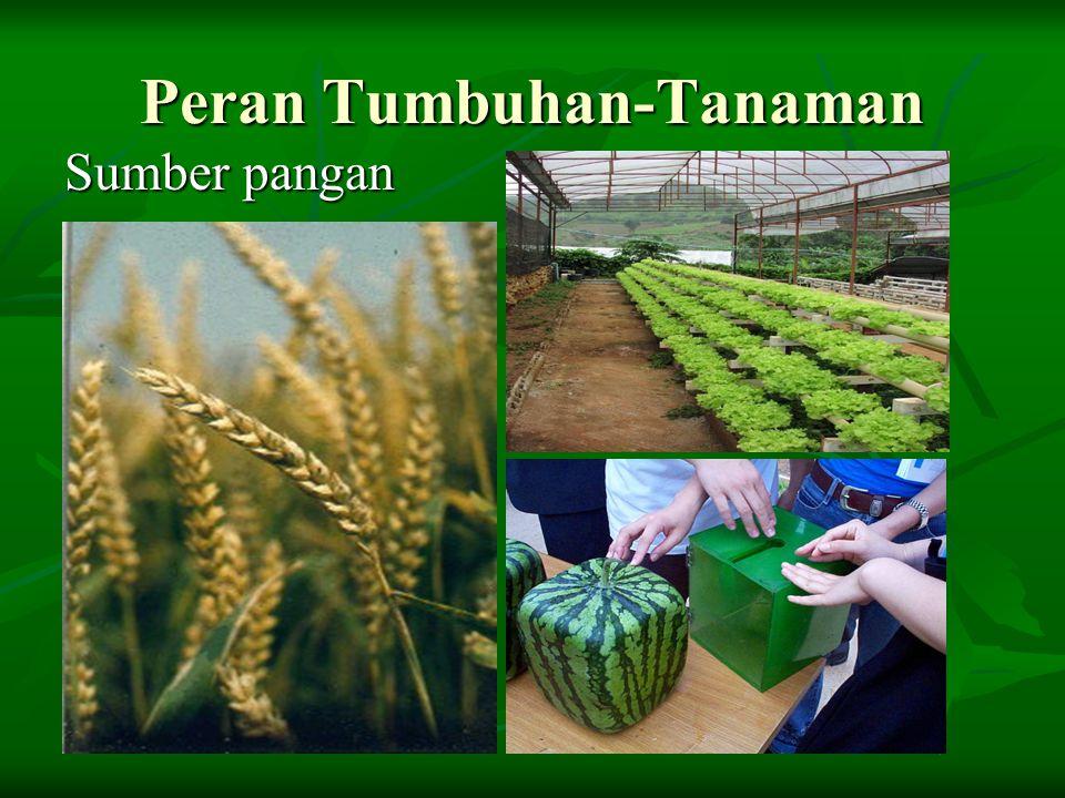 Peran Tumbuhan-Tanaman Sumber pangan