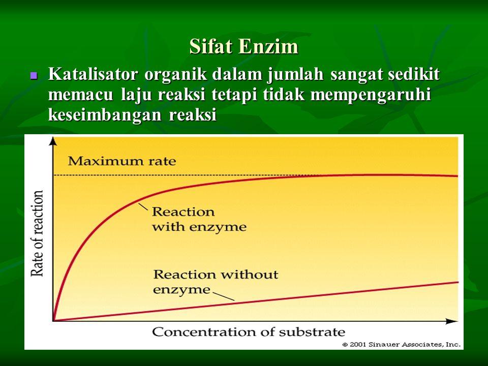 Sifat Enzim Katalisator organik dalam jumlah sangat sedikit memacu laju reaksi tetapi tidak mempengaruhi keseimbangan reaksi Katalisator organik dalam