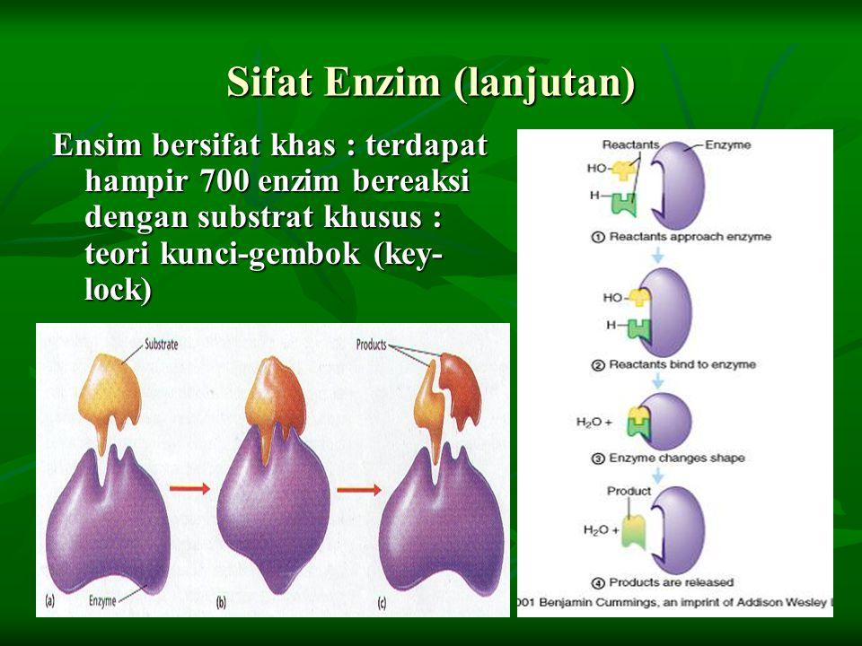 Sifat Enzim (lanjutan) Ensim bersifat khas : terdapat hampir 700 enzim bereaksi dengan substrat khusus : teori kunci-gembok (key- lock)