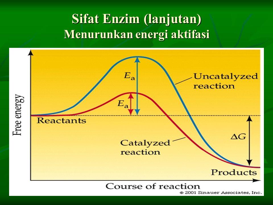 Sifat Enzim (lanjutan) Menurunkan energi aktifasi
