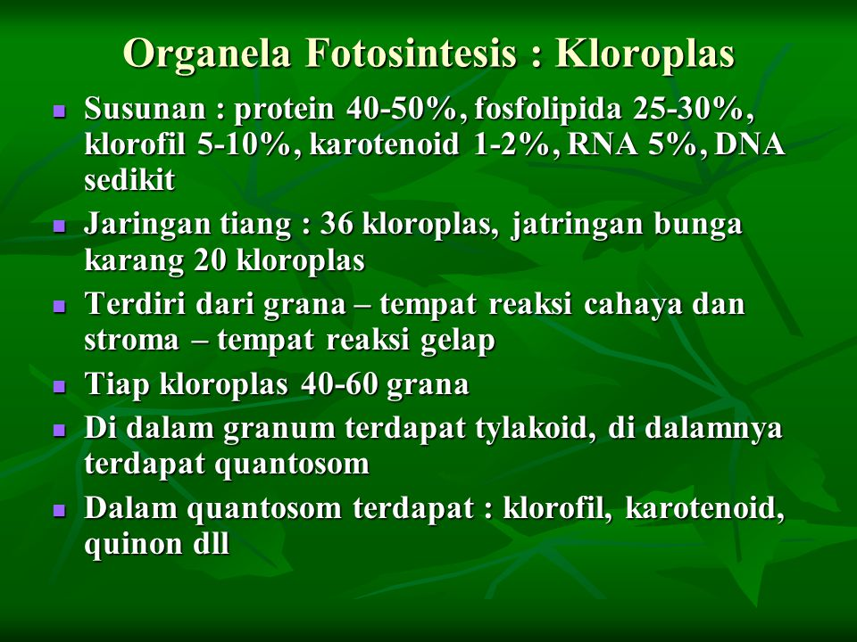 Organela Fotosintesis : Kloroplas Susunan : protein 40-50%, fosfolipida 25-30%, klorofil 5-10%, karotenoid 1-2%, RNA 5%, DNA sedikit Susunan : protein