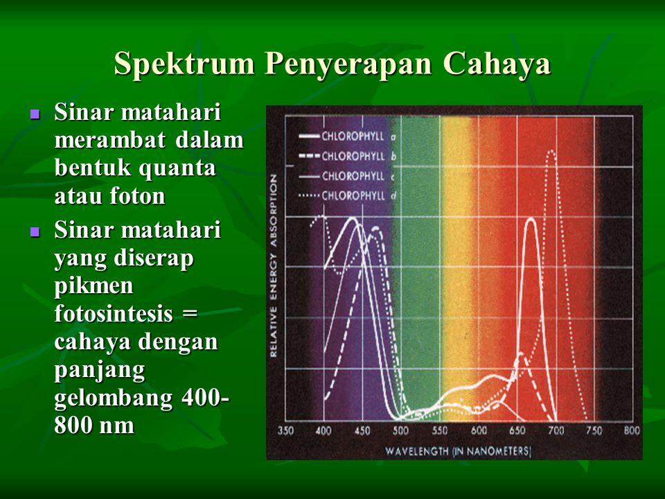 Spektrum Penyerapan Cahaya Sinar matahari merambat dalam bentuk quanta atau foton Sinar matahari merambat dalam bentuk quanta atau foton Sinar matahar