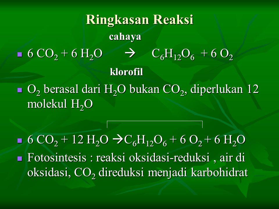 Ringkasan Reaksi cahaya cahaya 6 CO 2 + 6 H 2 O  C 6 H 12 O 6 + 6 O 2 6 CO 2 + 6 H 2 O  C 6 H 12 O 6 + 6 O 2 klorofil klorofil O 2 berasal dari H 2