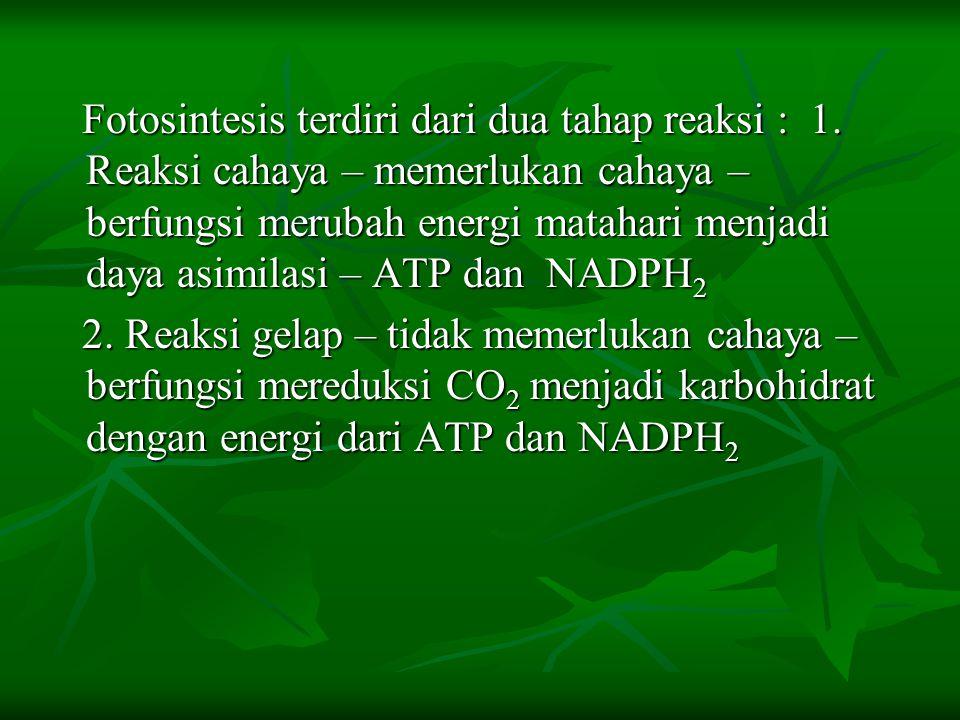 Fotosintesis terdiri dari dua tahap reaksi : 1. Reaksi cahaya – memerlukan cahaya – berfungsi merubah energi matahari menjadi daya asimilasi – ATP dan