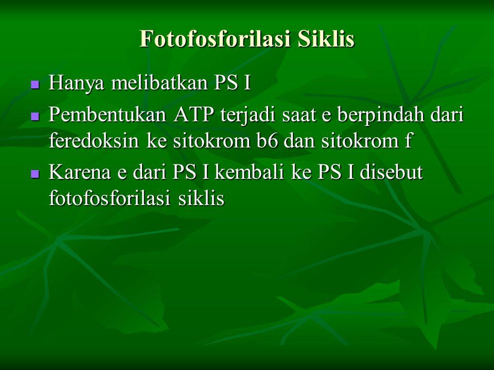 Fotofosforilasi Siklis Hanya melibatkan PS I Hanya melibatkan PS I Pembentukan ATP terjadi saat e berpindah dari feredoksin ke sitokrom b6 dan sitokro