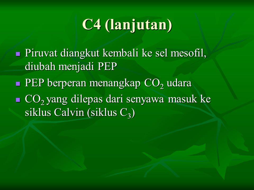 C4 (lanjutan) Piruvat diangkut kembali ke sel mesofil, diubah menjadi PEP Piruvat diangkut kembali ke sel mesofil, diubah menjadi PEP PEP berperan men