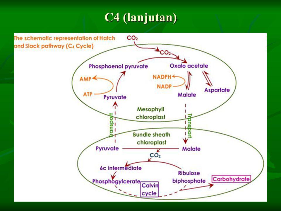 C4 (lanjutan)