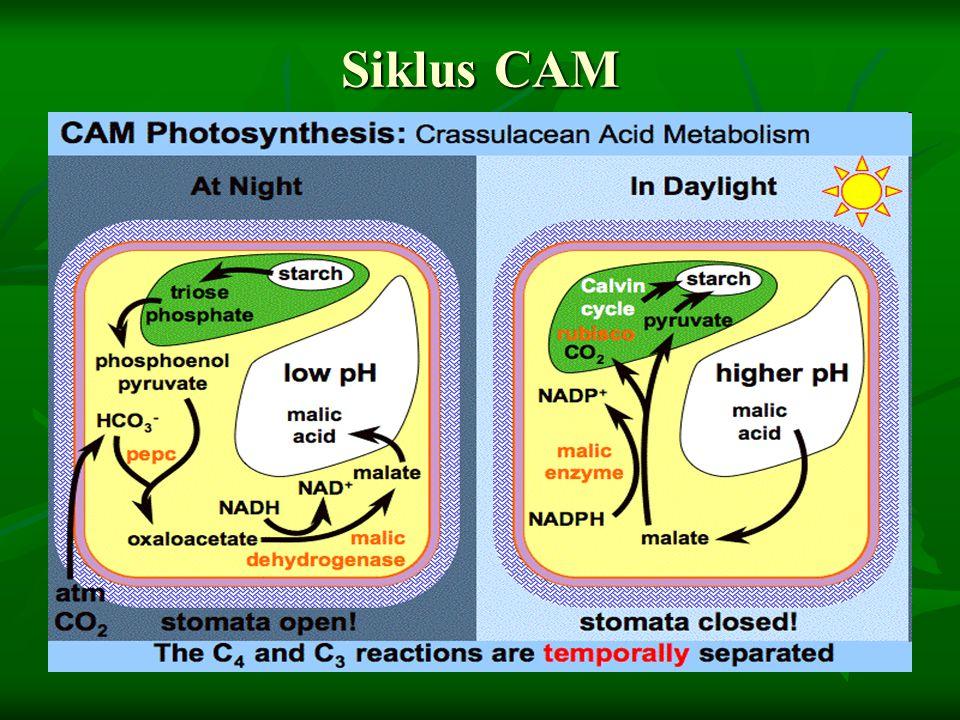 Siklus CAM