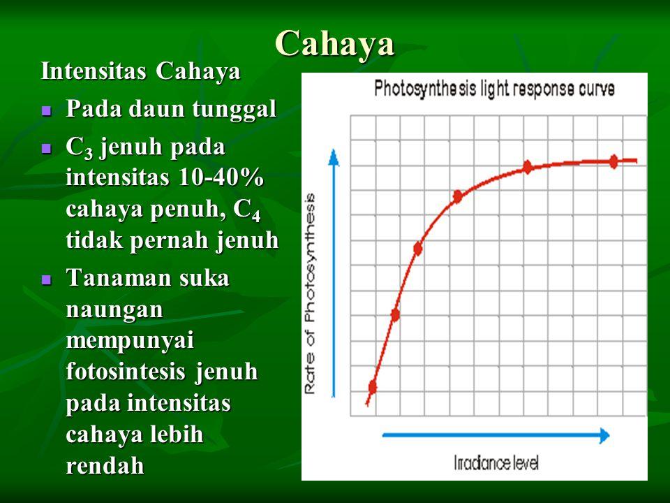 Cahaya Intensitas Cahaya Pada daun tunggal Pada daun tunggal C 3 jenuh pada intensitas 10-40% cahaya penuh, C 4 tidak pernah jenuh C 3 jenuh pada inte