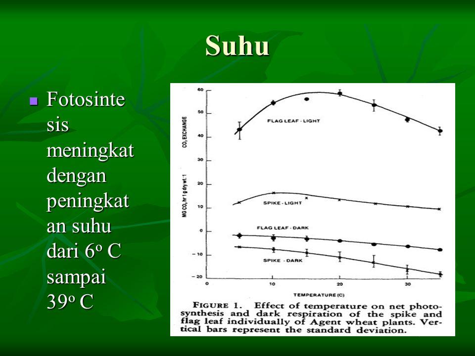 Suhu Fotosinte sis meningkat dengan peningkat an suhu dari 6 o C sampai 39 o C Fotosinte sis meningkat dengan peningkat an suhu dari 6 o C sampai 39 o