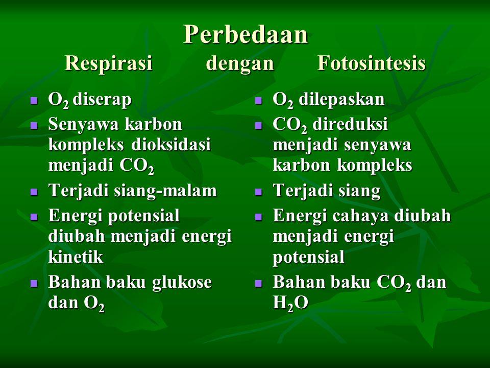 Perbedaan Respirasi dengan Fotosintesis O 2 diserap O 2 diserap Senyawa karbon kompleks dioksidasi menjadi CO 2 Senyawa karbon kompleks dioksidasi men