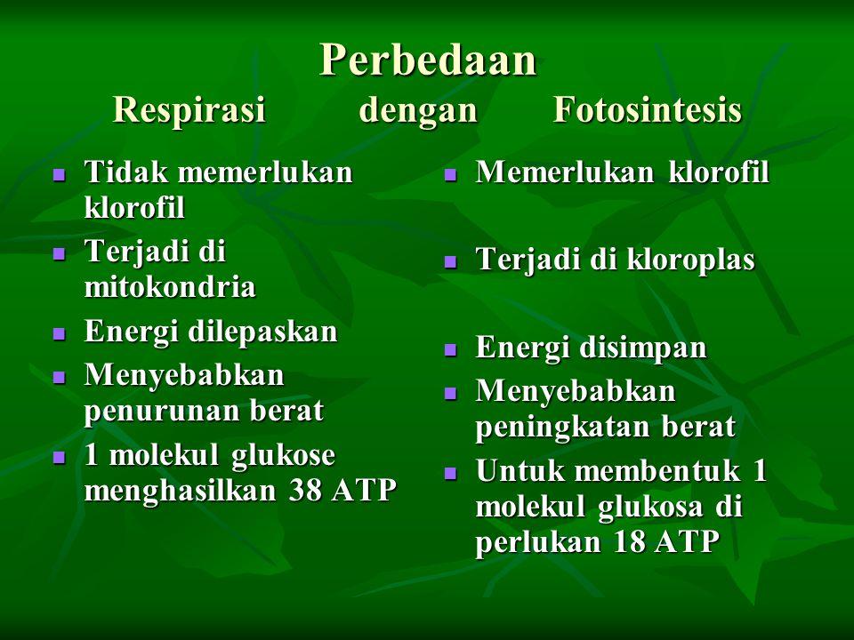 Perbedaan Respirasi dengan Fotosintesis Tidak memerlukan klorofil Tidak memerlukan klorofil Terjadi di mitokondria Terjadi di mitokondria Energi dilep