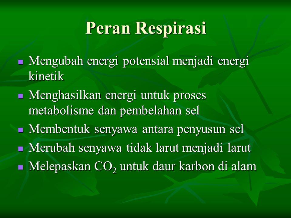 Peran Respirasi Mengubah energi potensial menjadi energi kinetik Mengubah energi potensial menjadi energi kinetik Menghasilkan energi untuk proses met